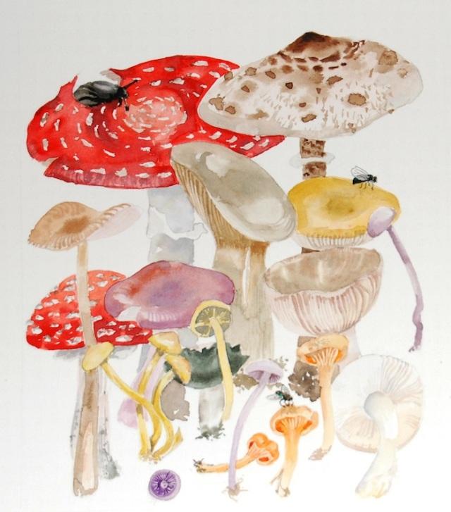 fungi oct copy